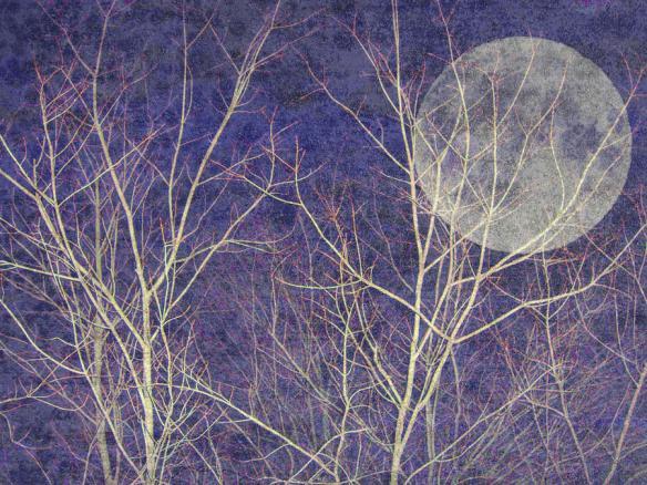 winter-night-with-full-moon-ev-cabrera-marinucci